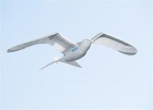 Smart-Bird-0